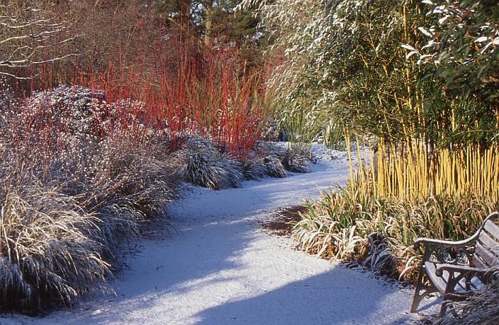 jak-przygotowac-ogrod-do-zimy