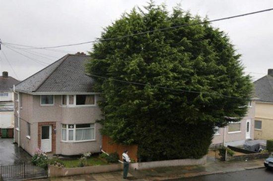 drzewo-w-granicy-dzialki