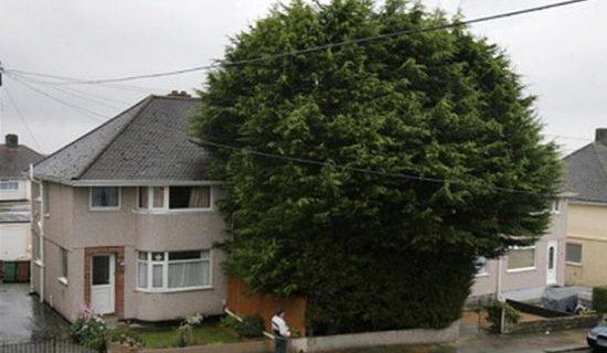 Drzewa i rośliny blisko granicy działki