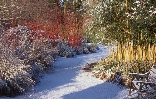 Jak przygotować ogród na zimę